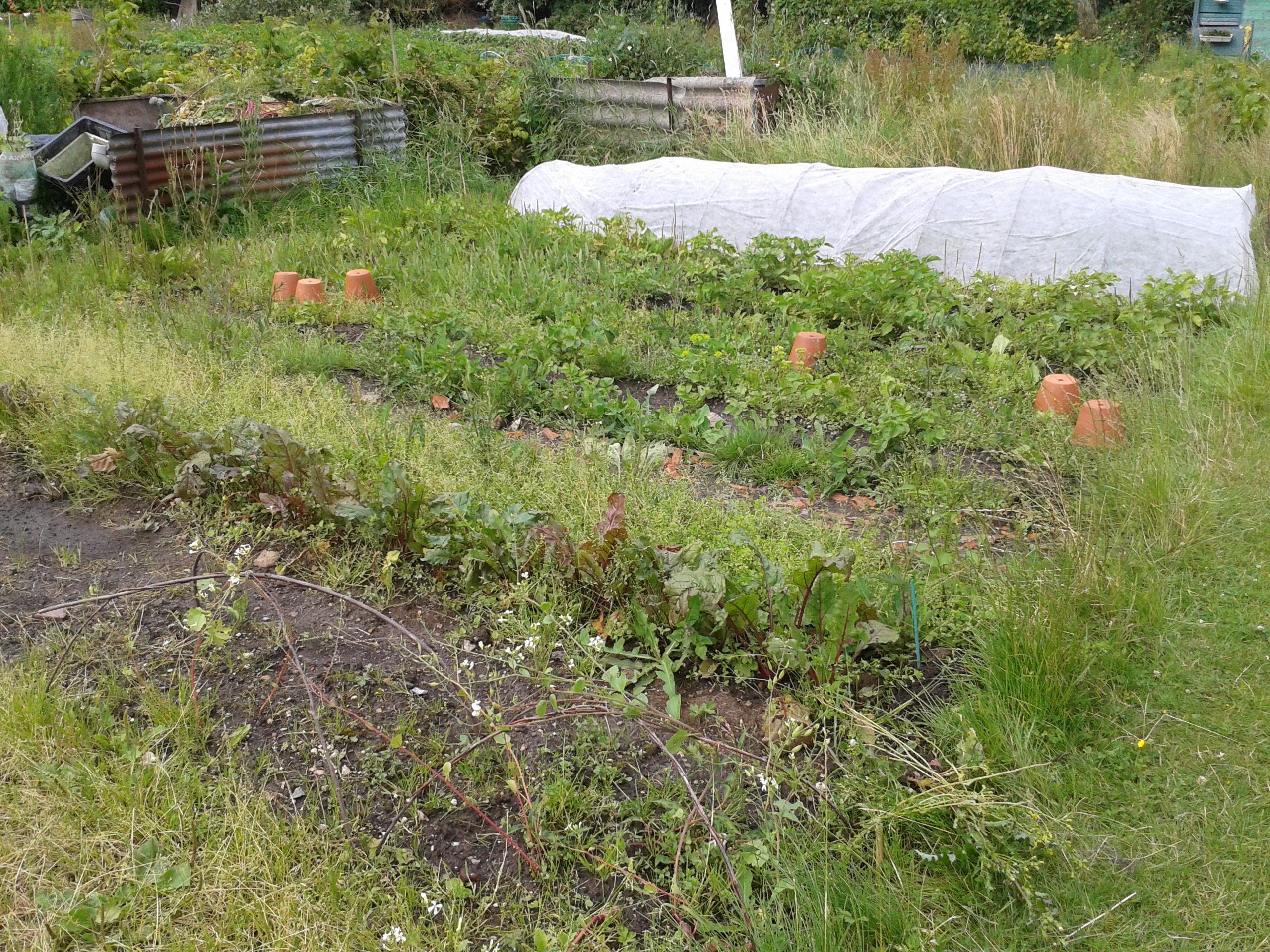 Jardin ouvrier le nid hibou for Jardin ouvrier